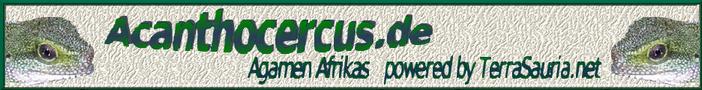 acanthocercus.de