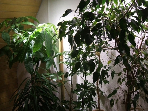 Terrasauria echsen for Fliegen in blumenerde entfernen